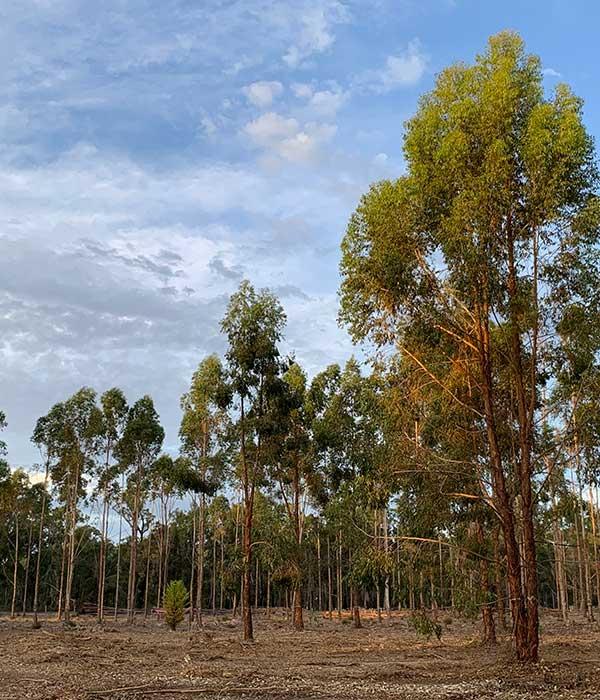 Forest Establishment